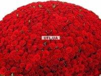 Букет 1000 роз -1001 гранатовая роза