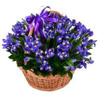 Заказать букет цветов «101 синий ирис» с доставкой в любой город