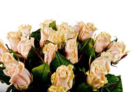 Букет Поштучно кремовые розы