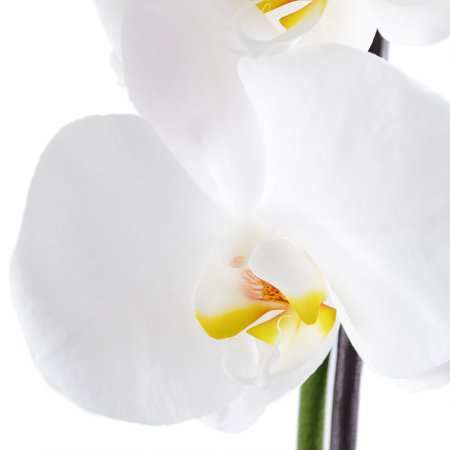 Букет White Orchid
