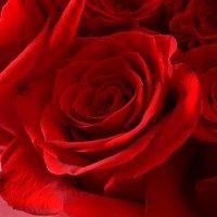Букет Огонь желания 51 роза +Asti Martini