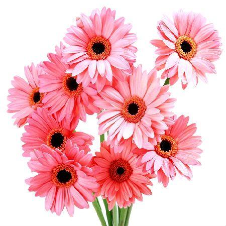 Букет Светло-розовые герберы поштучно