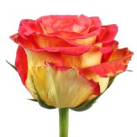 Bouquet Red and yellow premium roses by the piece