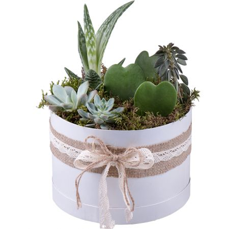 Букет Succulents in decorative boxes