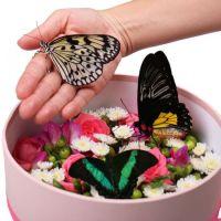 Букет Коробка с бабочками