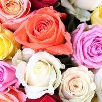 Букет 175 разноцветных роз