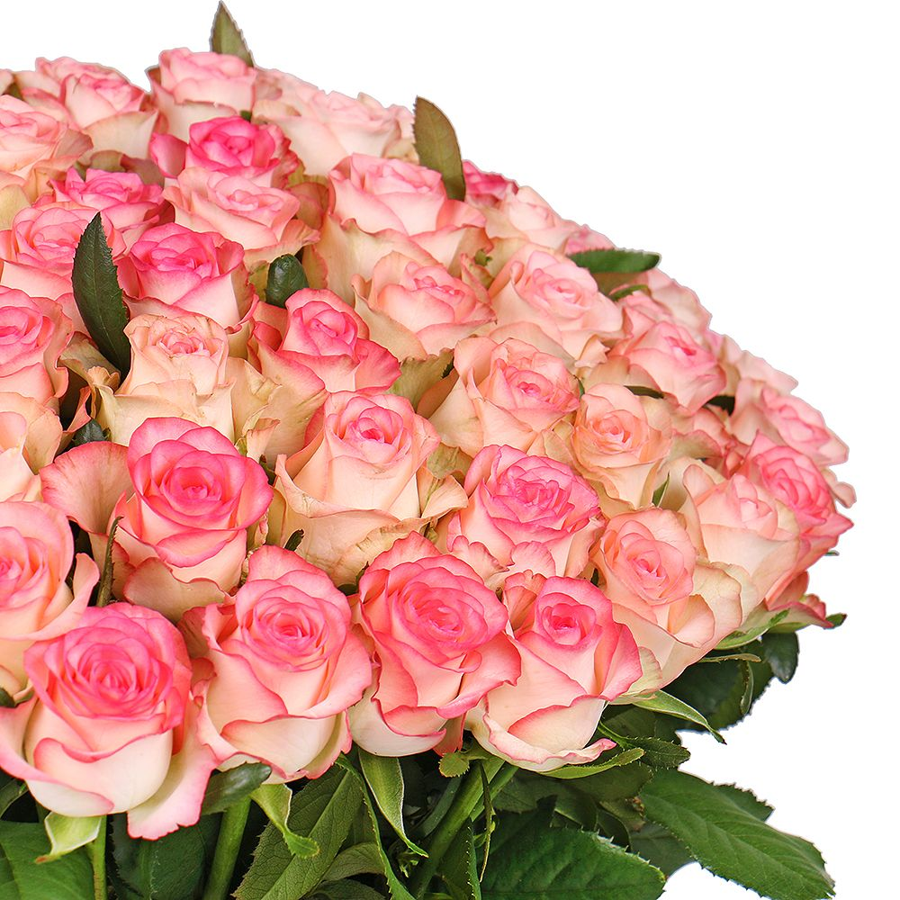 Букет 101 white-and-pink roses