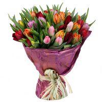 Букет Букет тюльпанов 45 шт