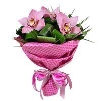 Купить красивый букет из орхидей «Хит сезона» с доставкой