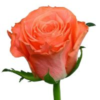 Букет Коралові троянди поштучно Київ