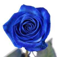 Поштучно синие розы