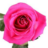 Букет Рожеві преміум троянди поштучно Київ
