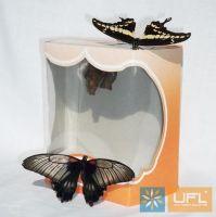 Рождение бабочки из куколки