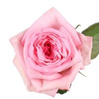 Bouquet Rose O'Hara Pink by piece