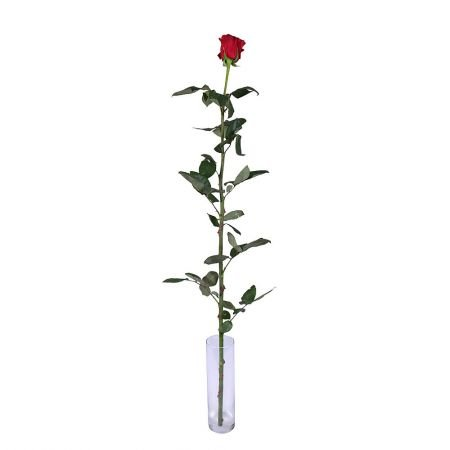 Bouquet Red rose by the piece (1m)