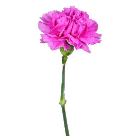 Букет Розовые гвоздики поштучно