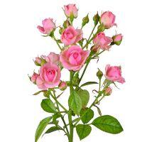 Заказать Розовые кустовые розы поштучно в интернет магазине цветов