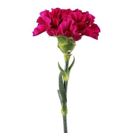 Цветы поштучно купить