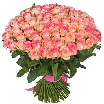 101 бело-розовая роза Миннесота