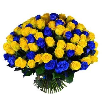 101 желто-синяя роза Нойальбенройт