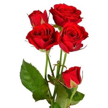 Красные кустовые розы поштучно Киев