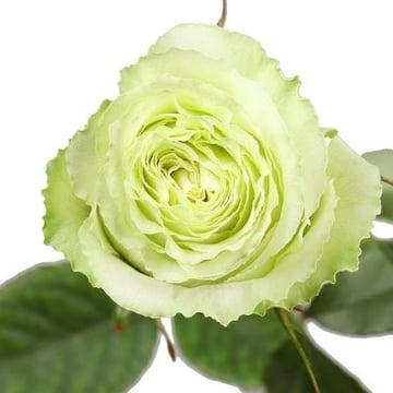 Премиум роза Лимонад поштучно Киев