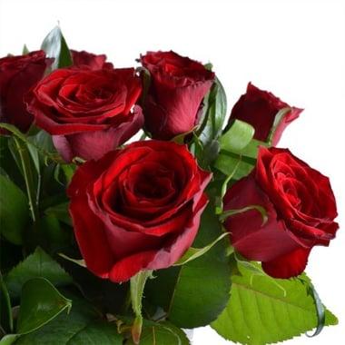 Розы Киев