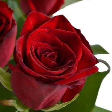 19 красных роз Буфало Груф
