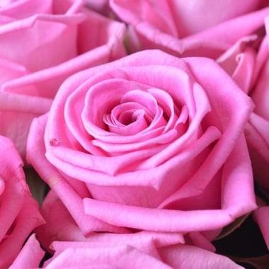101 розовая роза Магический вулкан 101 роза Федоровский
