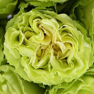 Лесная Нимфа 19 салатовых роз Буфало Груф