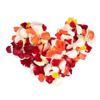 Лепестки разноцветных роз  Киев