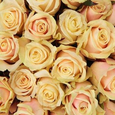 Поштучно кремовые розы Киев