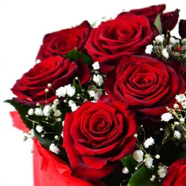 Розы + гипсофила Гадсден