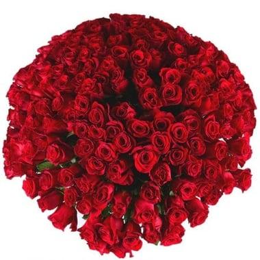Искренность чувств 201 роза Киев