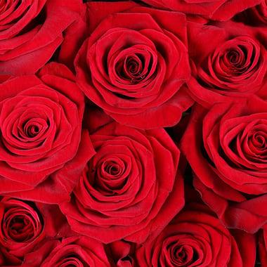 Обольщение 101 роза + Asti Martini Федоровский