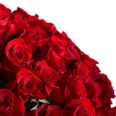 Огромный букет роз 301 роза Джулианова