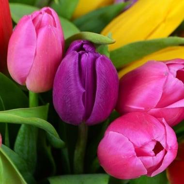 51 тюльпан Киев