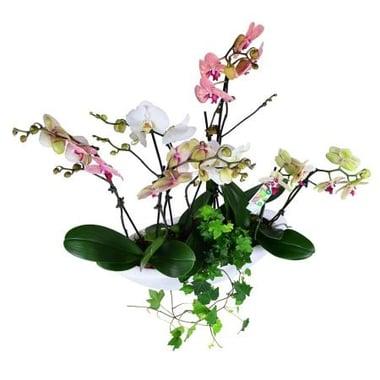 Корзина орхидей Ильинцы