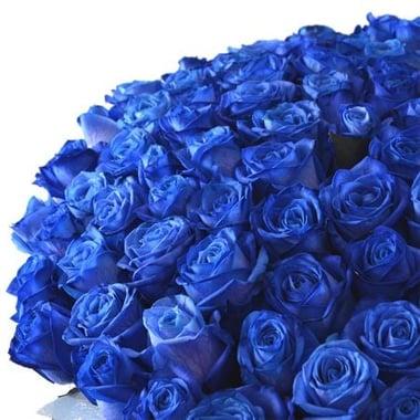101 синяя роза Федоровский