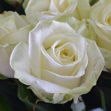 Букет белых роз Мурманск
