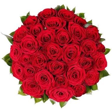 Марго 31 красная роза Гаага