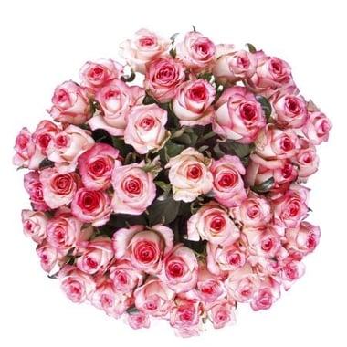 51 бело-розовая роза  Киев