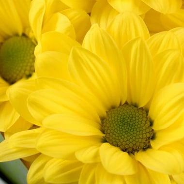 Солнечный праздник Киев
