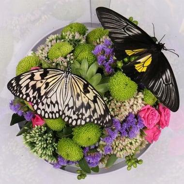 Прозрачная коробка с бабочками Киев