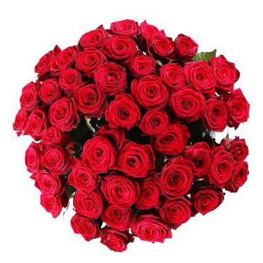 50 роз Гаага
