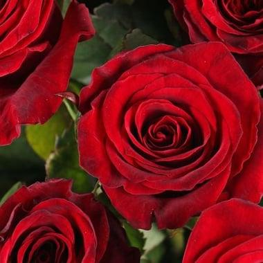 15 роз Югорск