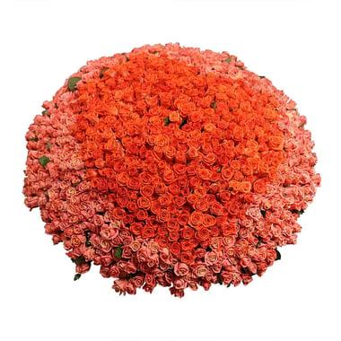 1001 коралловая роза  Гаага