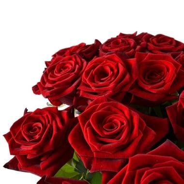 21 красная роза Гаага
