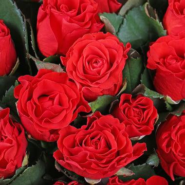 25 красных роз Георгиевск
