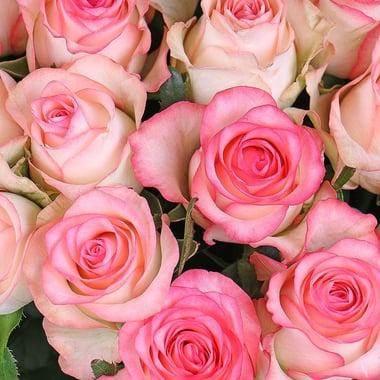 101 бело-розовая роза Федоровский